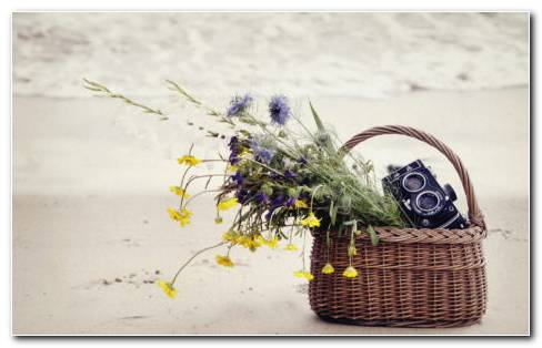 Flowers And Camera In The Basket HD Wallpaper