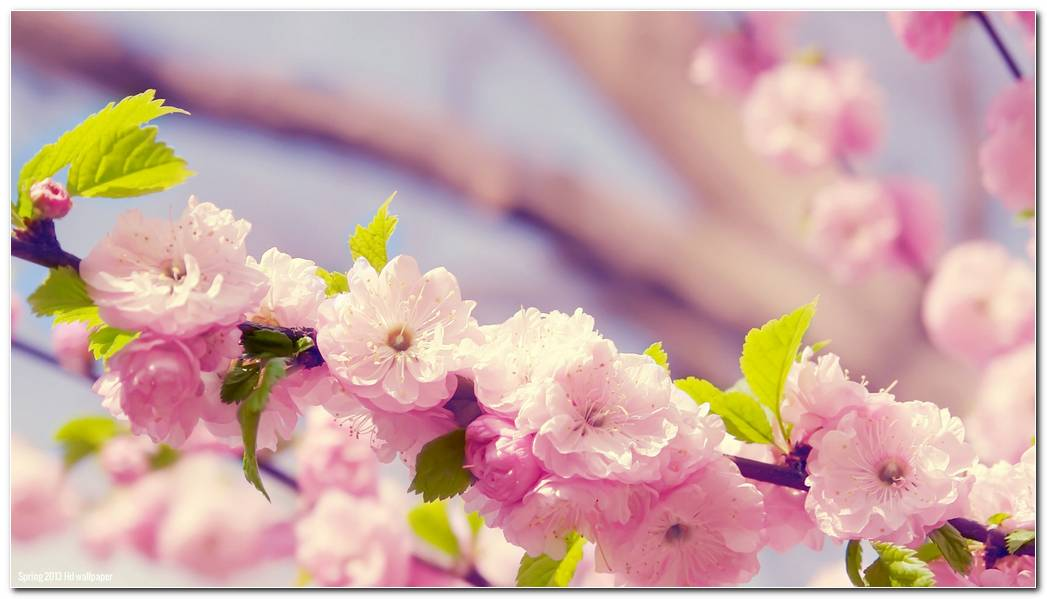 Flowers Spring Nature Wallpapers