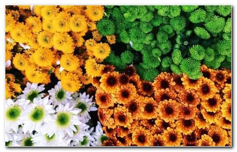 Flowers In The Attic HD Wallpaper