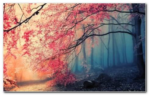 Foggy HD Wallpaper