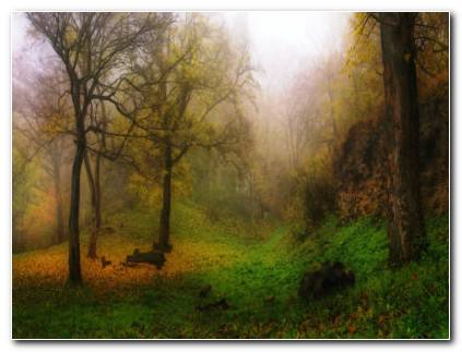Foggy Autumn Forest HD Wallpaper