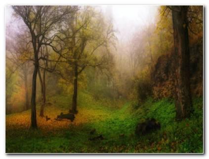 Foggy Autumn Forest HD Wallpaper