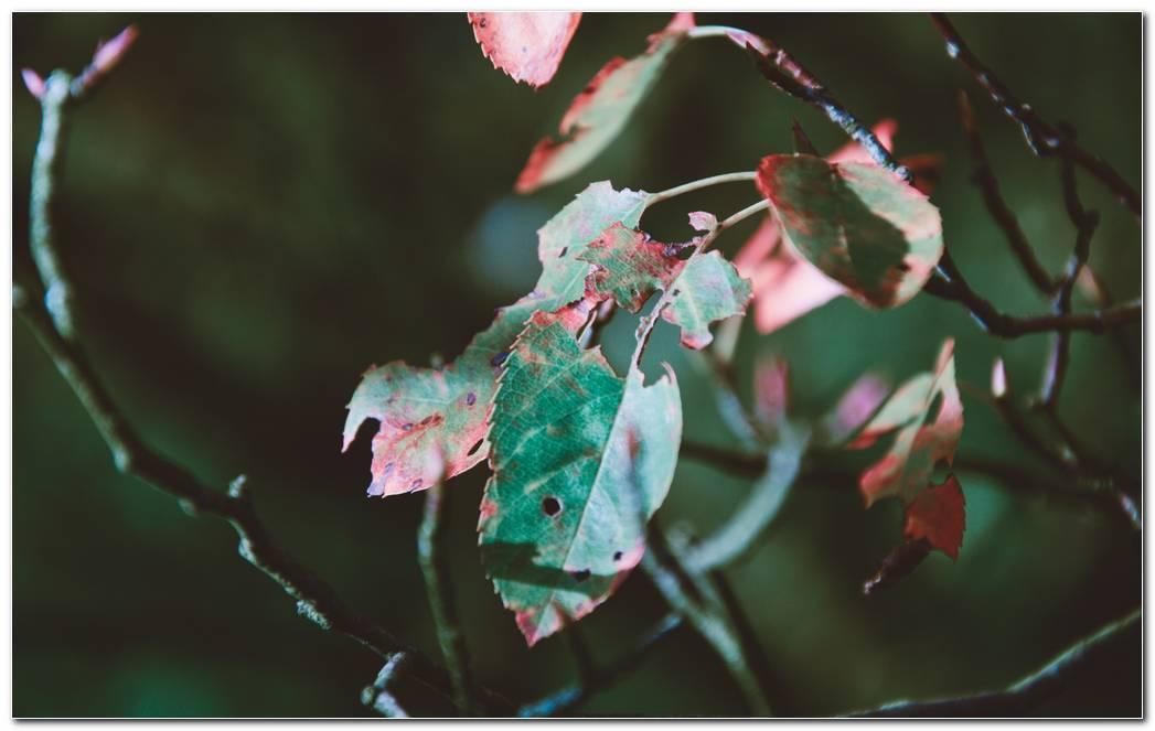 Foliage Autumn Wallpaper Dry