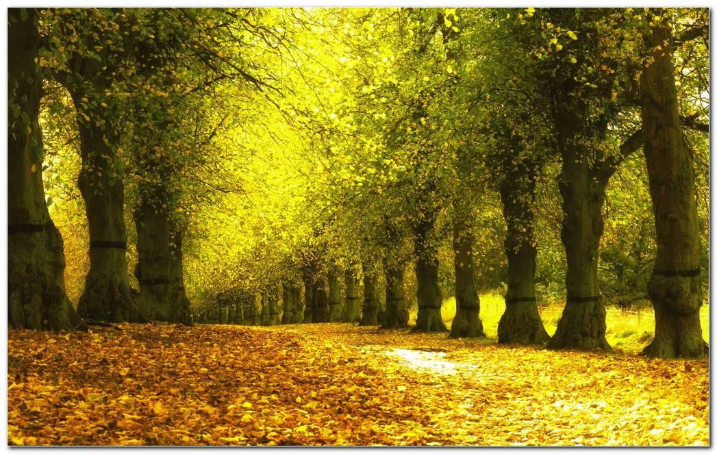 Foliage Autumn Wallpaper