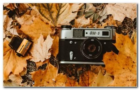 Foliage HD Wallpaper New