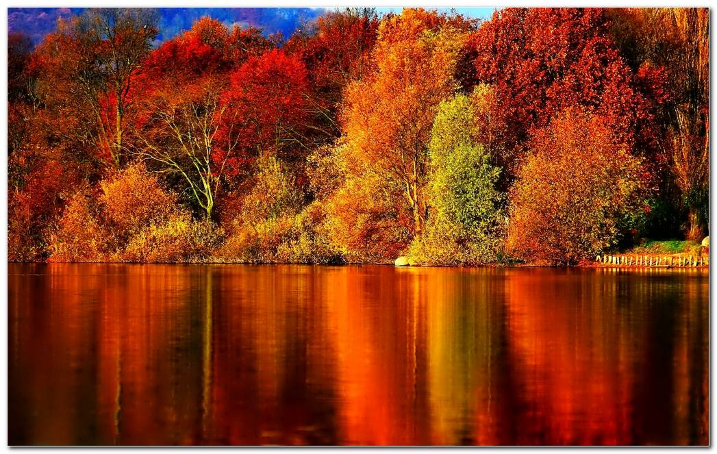 Forest Autumn Season Nature Wallpaper Background