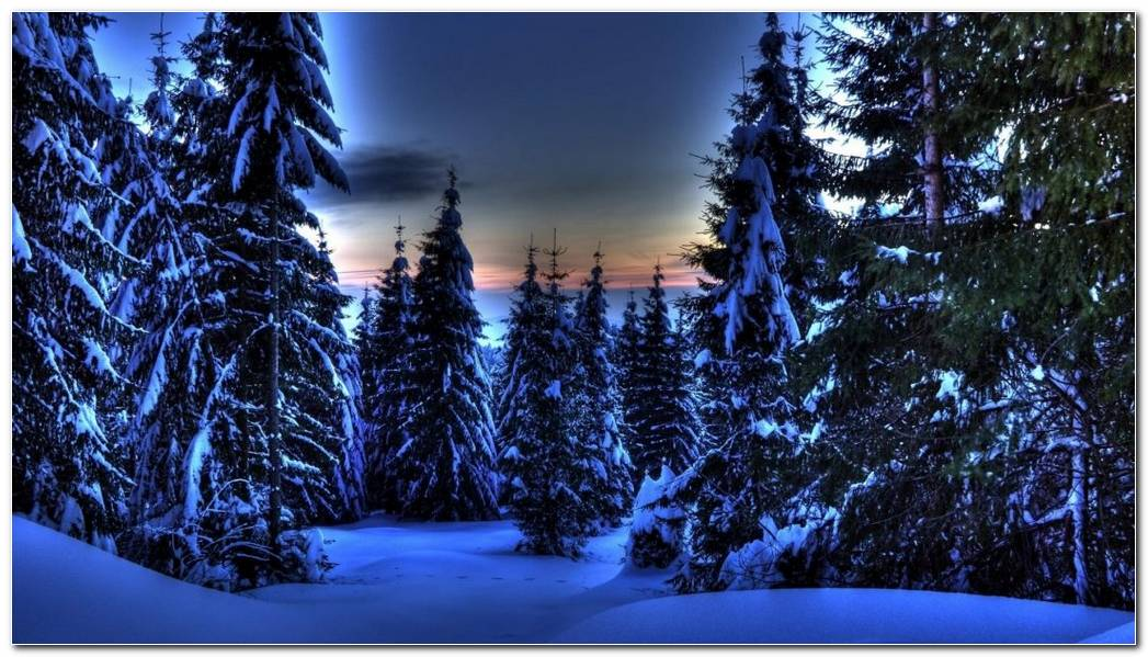 Forest Beautiful Winter Night Nature Wallpaper Background
