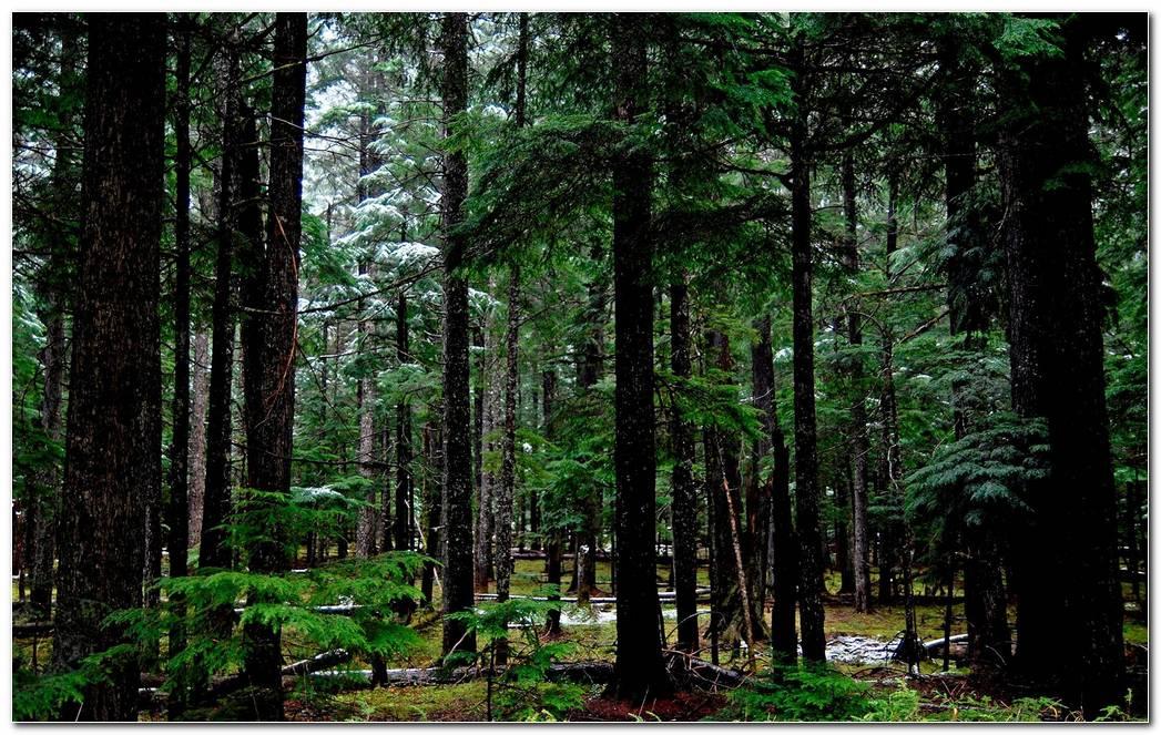 Forest Desktop Nature Backgrounds Wallpaper Image