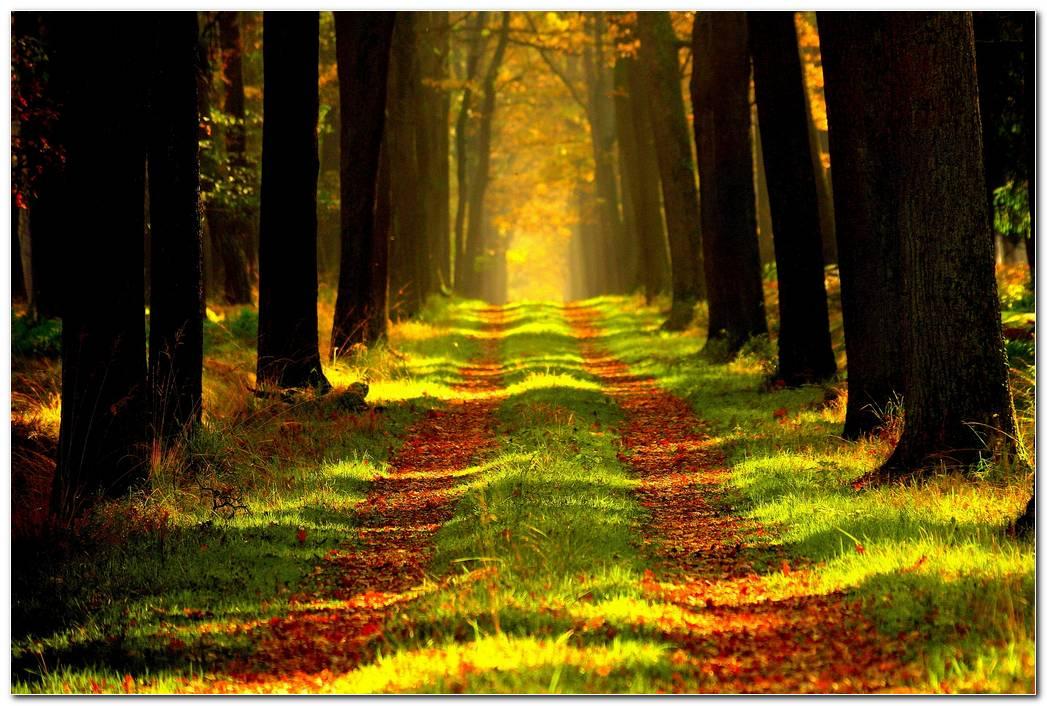 Forest Hd Autumn Wallpaper