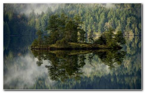 Forest Lake Reflection HD Wallpaper