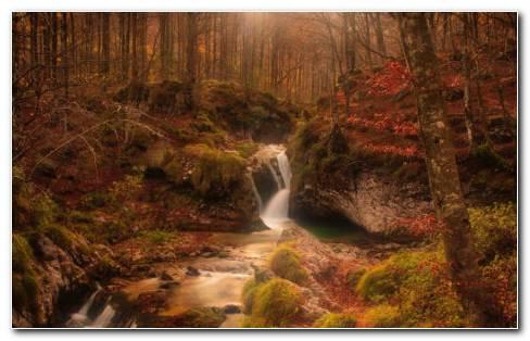 Forest Waterfall HD Wallpaper