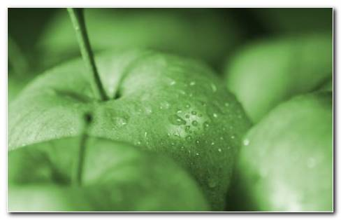 Fresh Green Apples HD Wallpaper