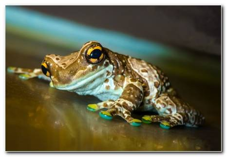 Frog Macro Surface