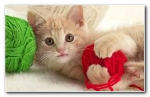 Funny Kitten 1024 X 768