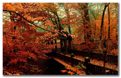 Garden Of Orange Trees HD Wallpaper