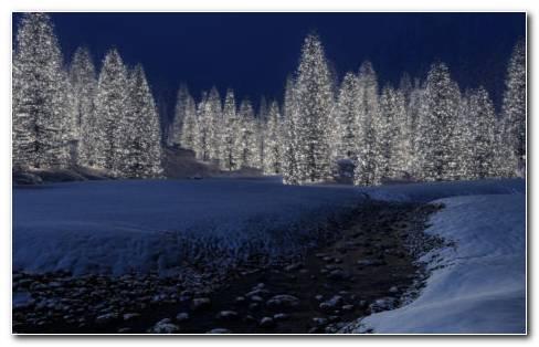 Garden Of Snow HD Wallpaper