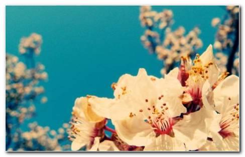 Garden Sky HD Wallpaper