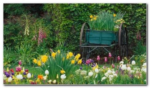 Gardens Beautiful HD Wallpaper