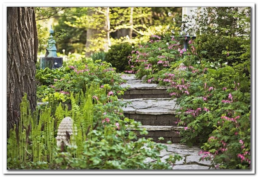 Garten Bilder