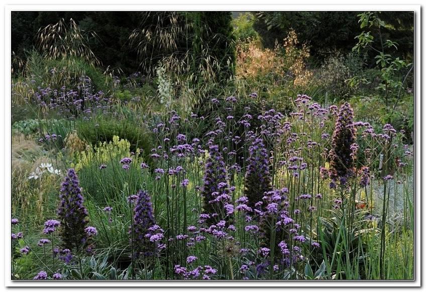 Garten Janke