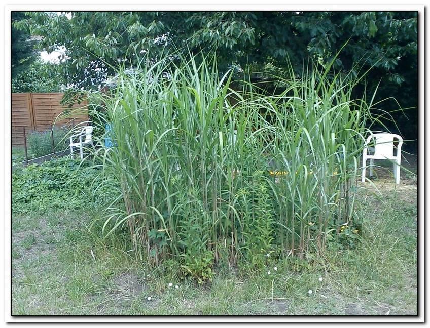Gartenbegrenzung Zaun