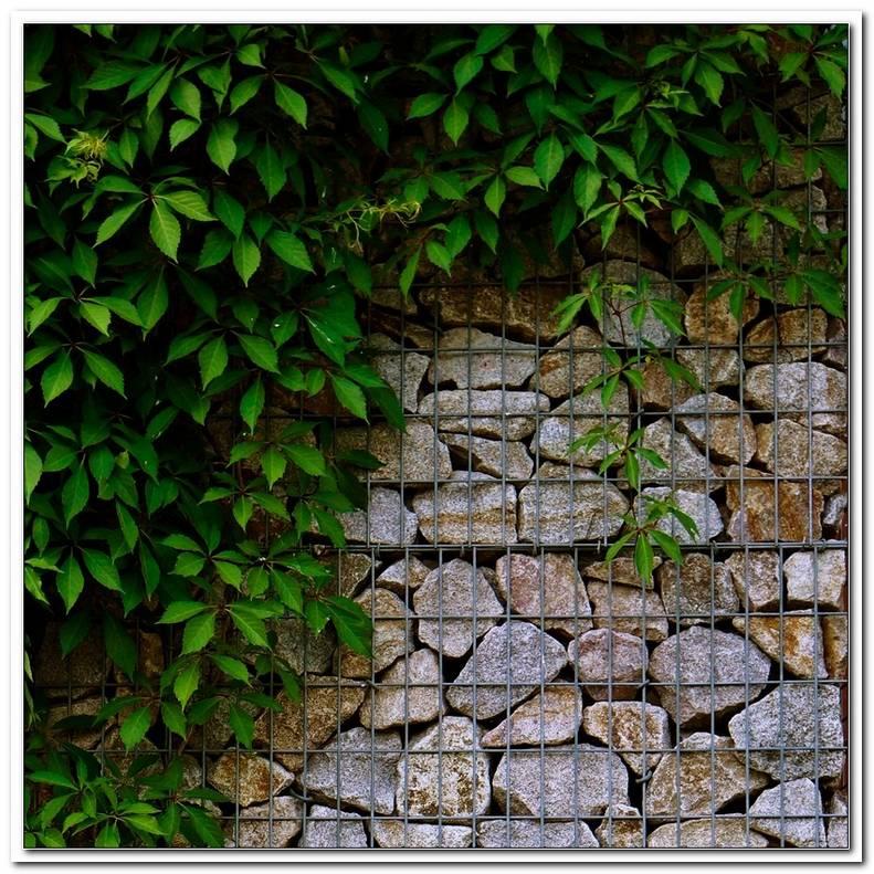 Gartenmauer Steink?Rbe