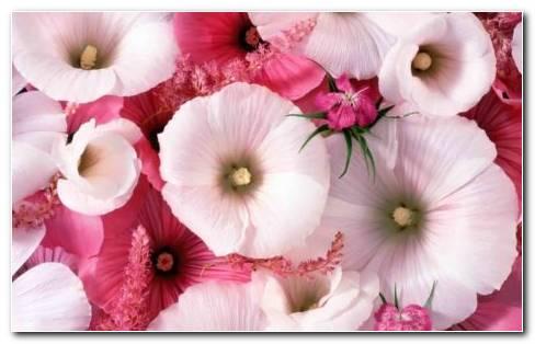 Genus Flowers Garden