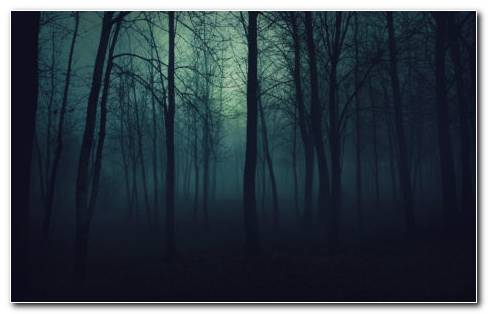 Gloomy Forest HD wallpaper