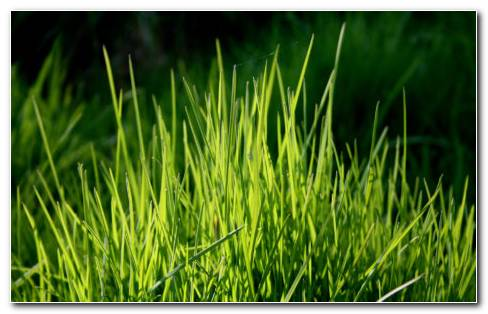 Grass HD Wallpaper