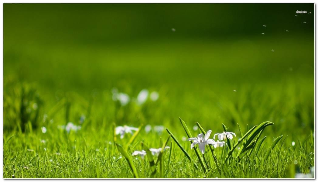 Green Background Wallpaper. White Wildflowers In The Grass Widescreen Desktop