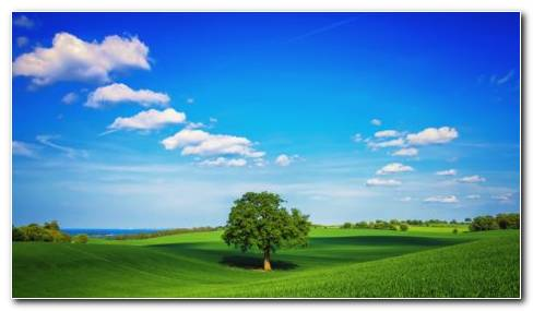 Green Fields HD Wallpaper