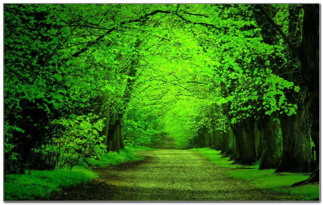 Green Forest Background Wallpaper