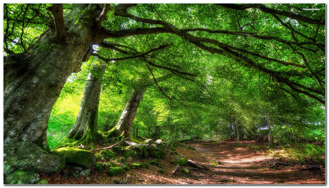 Green Forest Nature Amazing Wallpaper Background