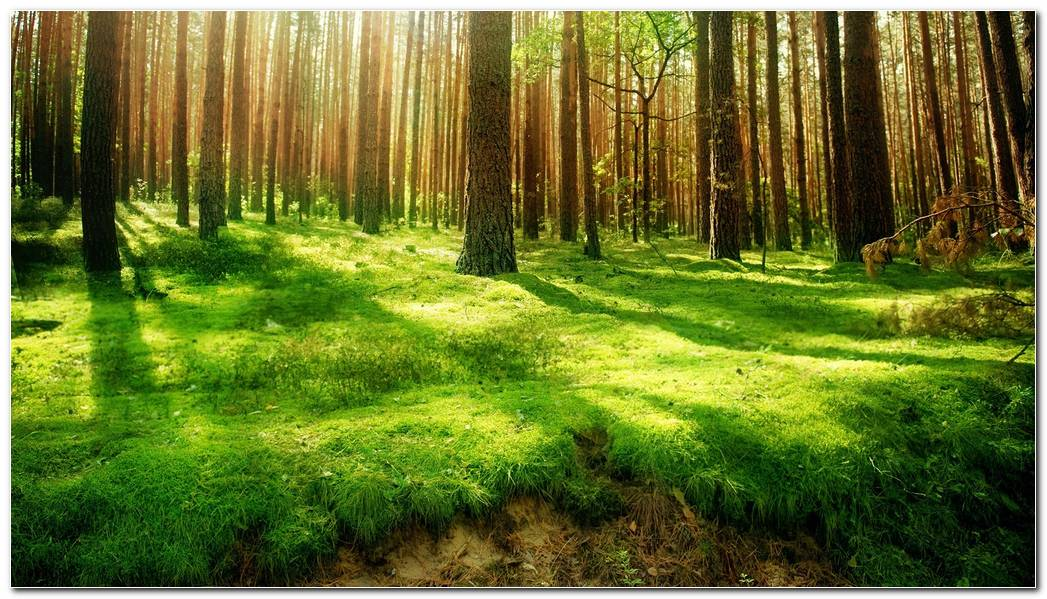 Green Forest Nature Image Wallpaper Background