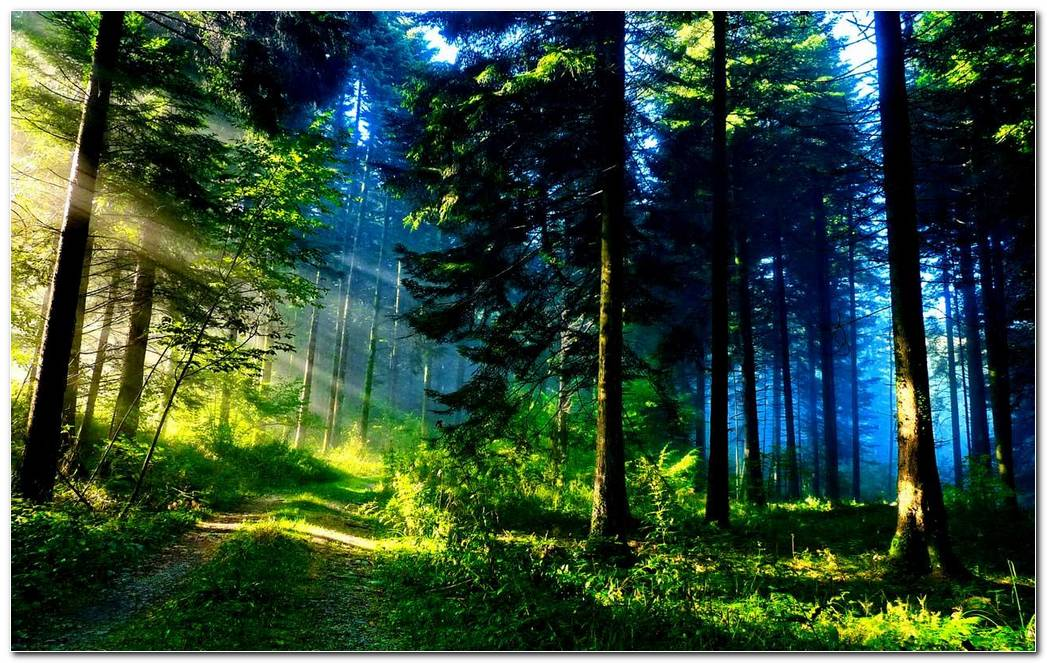 Green Forest Nature Picture Wallpaper Background