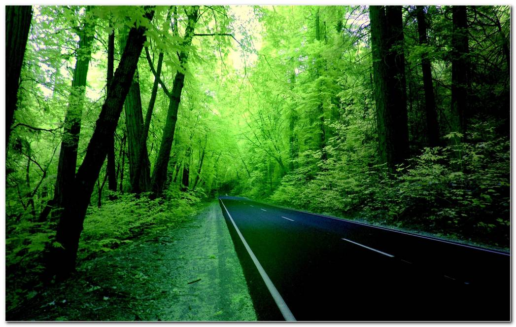 Green Forest Nature Wallpaper Background Image