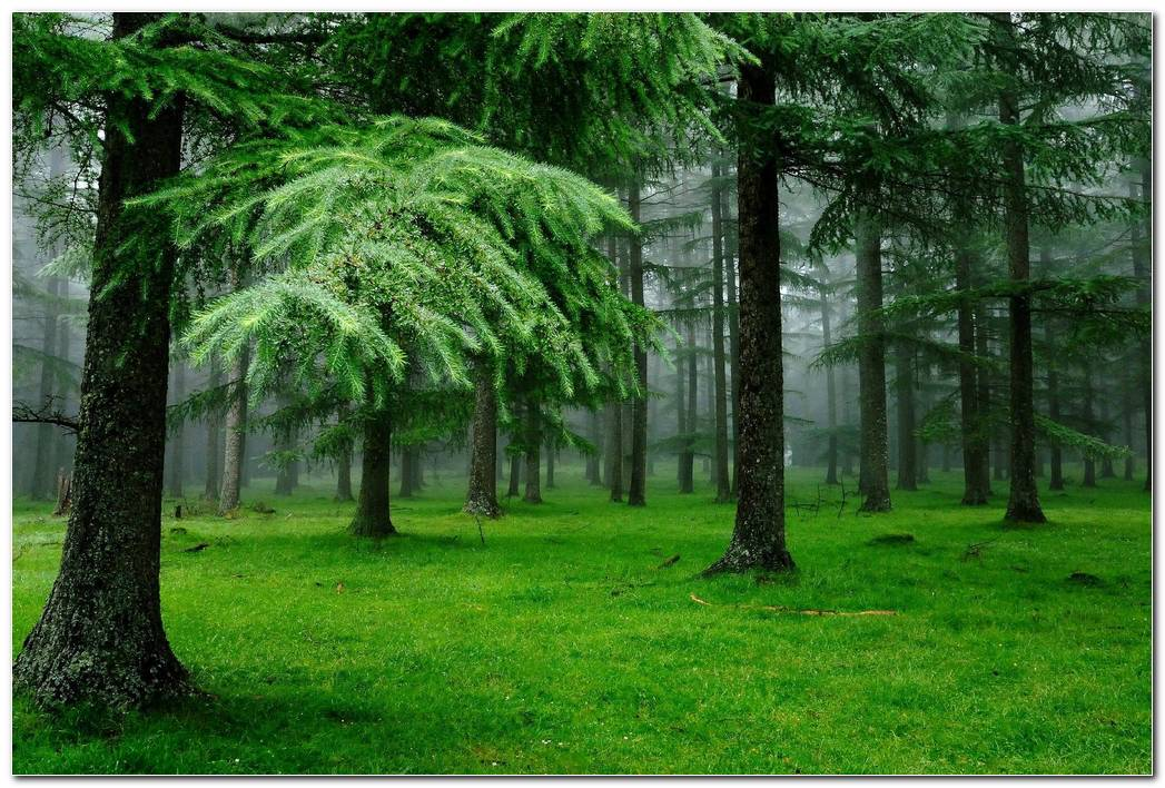 Green Forest Nature Wallpaper Background Picture
