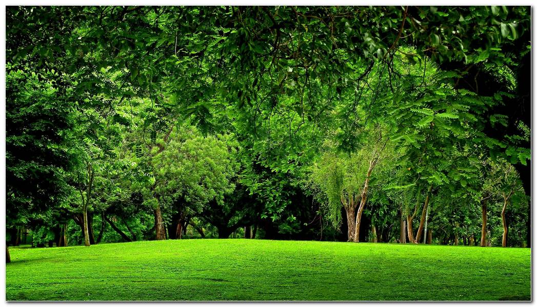 Green Forest Nature Wallpaper Background