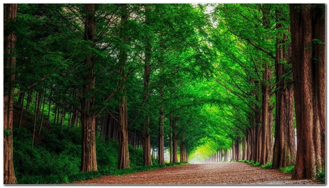 Green Forest Trees Straight Road Nature Wallpaper Background