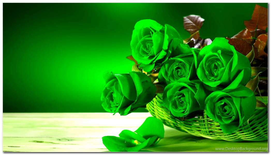 Green Rose Photos Wallpaper