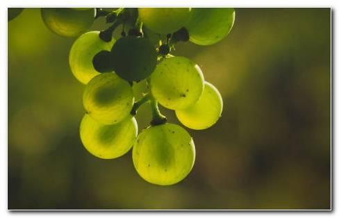 Green Grapes Nutrition HD Wallpaper