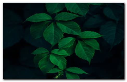Green Leaves & Dark Background HD Wallpaper