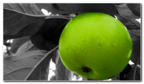 Greenish Apple HD Wallpaper