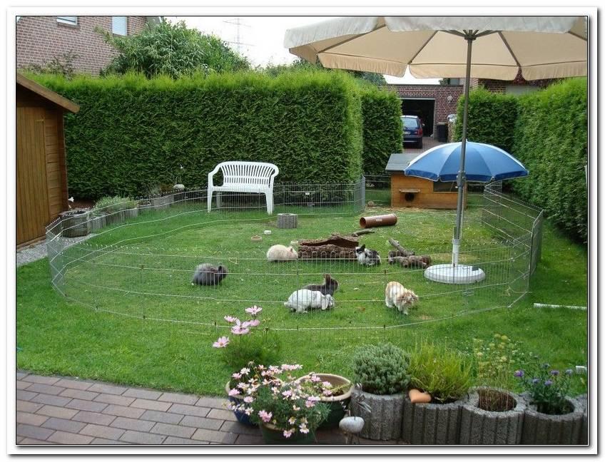 Hasen Im Garten