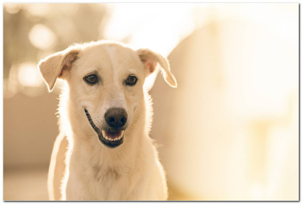 Hd Dog Wallpaper Desktop Image