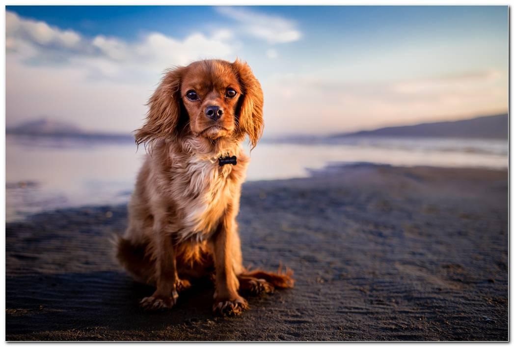 Hd Dog Wallpaper Desktop Photo