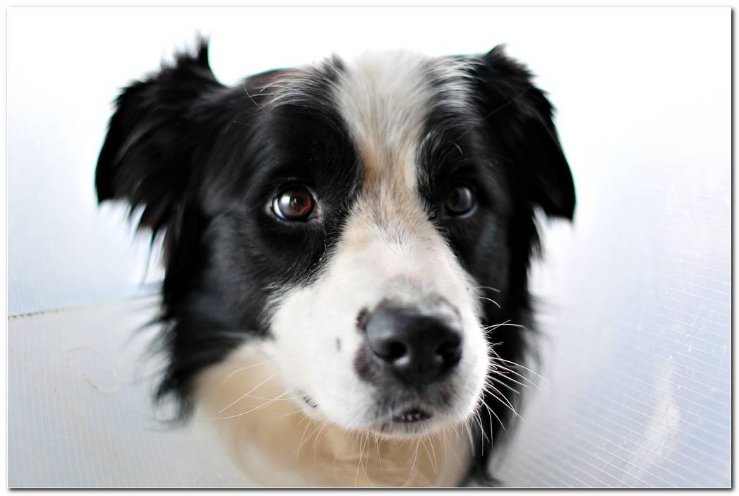 Hd Face Dog Wallpaper
