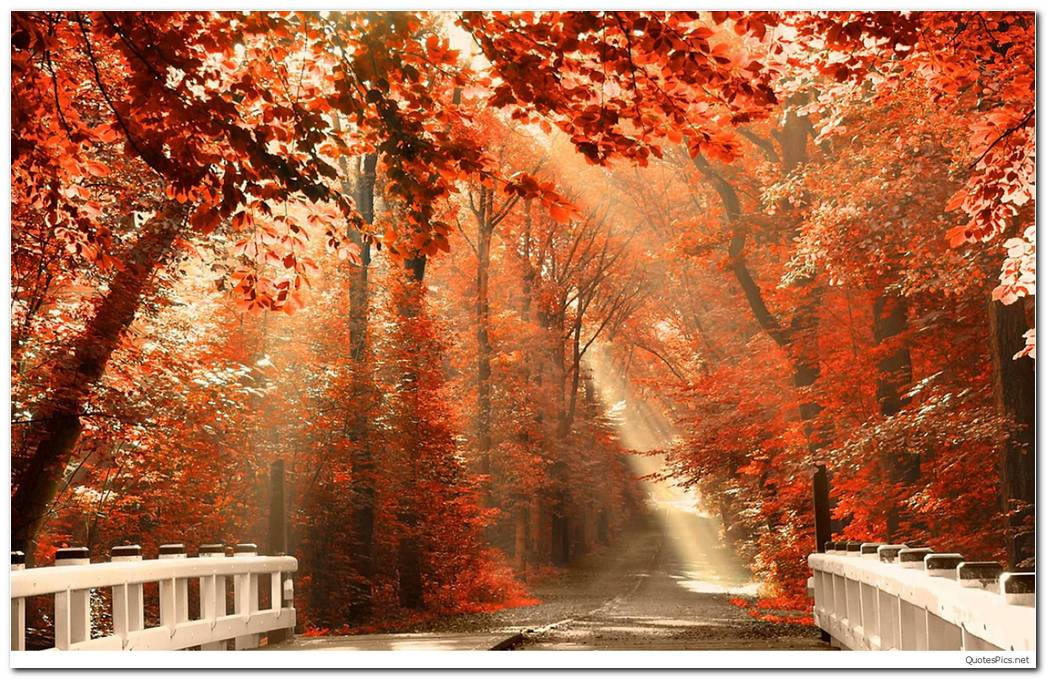 Hello Autumn Season Nature Wallpaper Background