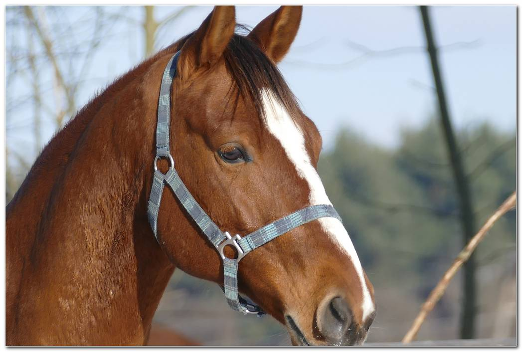 Horse Hd Animal Wallpaper