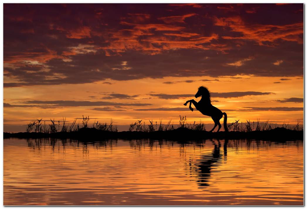 Horse Reflection Sunset Wallpaper
